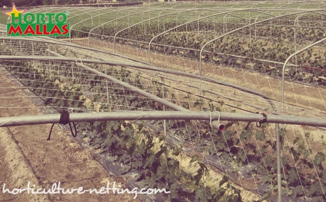 In comparison to other espalier products and trellising systems available that may come at a higher price, plant net meshes are a very cheap option