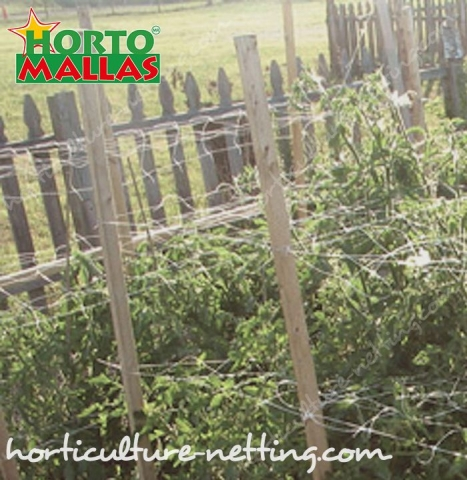 Support netting facilitates the pruning, therefore reduce mechanical stress in tomato plants.