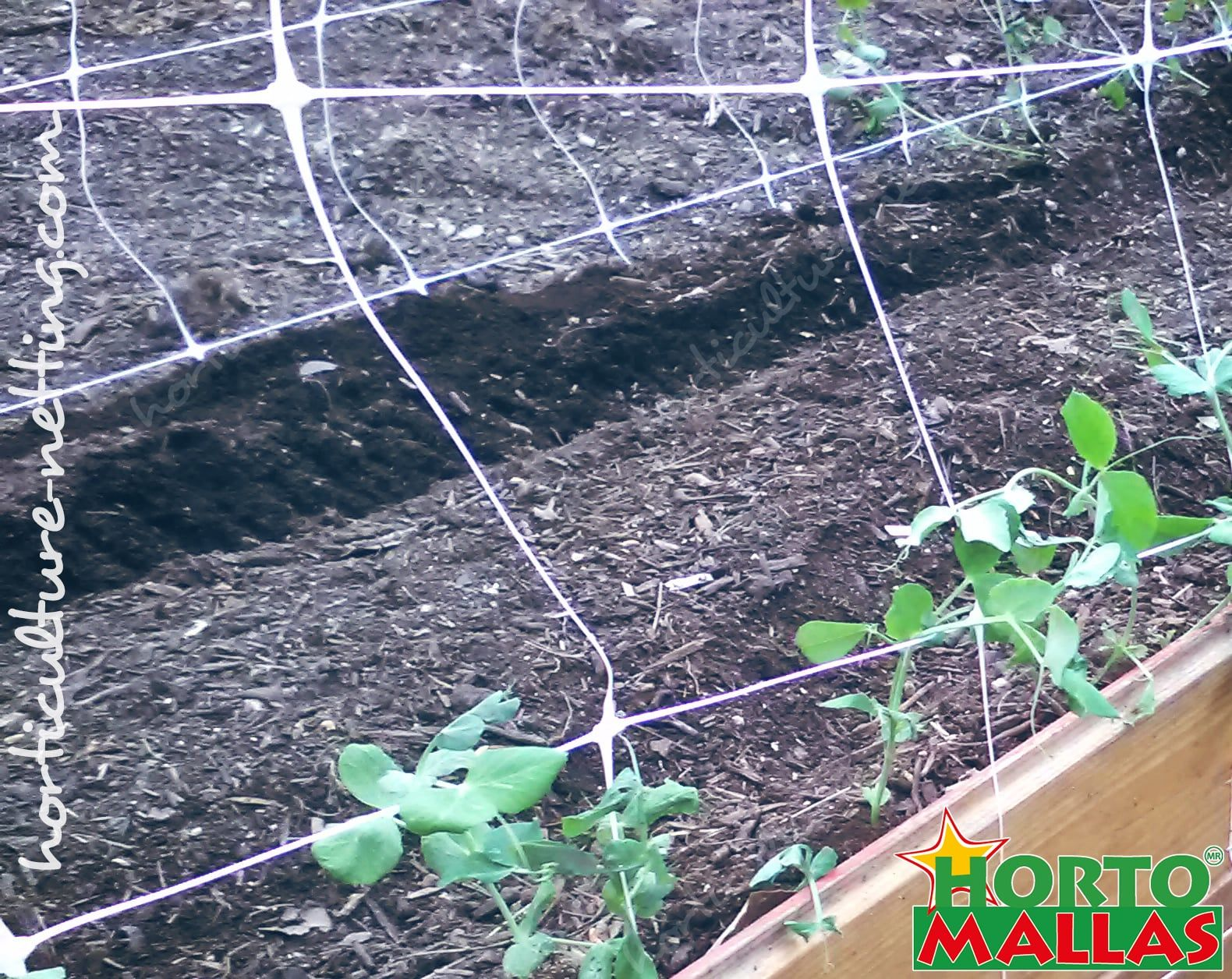 protect your crop with espalier mesh HORTOMALLAS